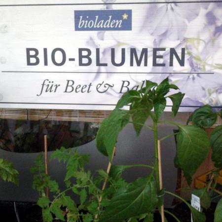 bioladen -- BIO-BLUMEN -- für Beet & Balkon