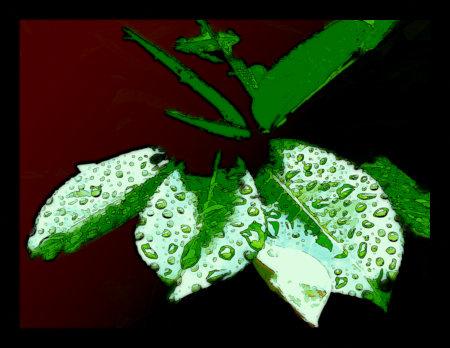 Stark mit Gimp bearbeitetes Foto nasser Blätter