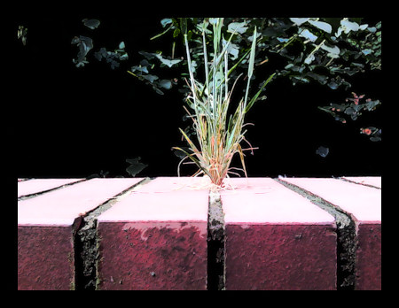 Stark mit Gimp nachbearbeitetes Bild eines Grases, dass auf einer Fuge in einer Mauer wächst.