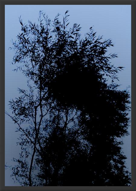 Stark mit Gimp bearbeitetes Foto einer Weide (Baum)
