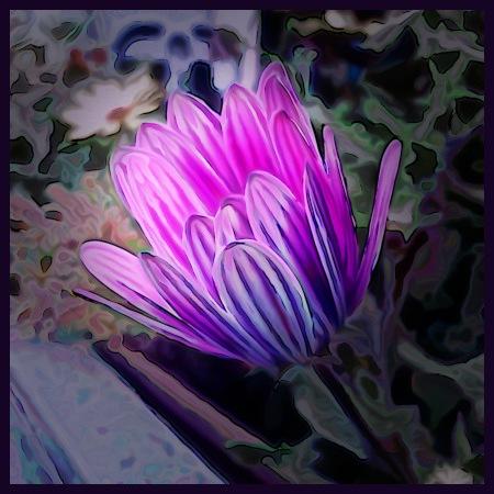 Stark mit Gimp nachbearbeitetes Foto einer Blüte