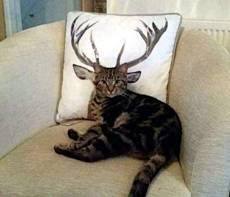 Schnappschuss einer Katze, die so vor einem Kissen mit Hirschkopf im Sessel liegt, dass es aussieht, als hätte sie ein Geweih