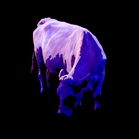 Stark mit Gimp bearbeitetes Foto einer Kuh