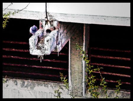 Stark mit Gimp bearbeitetes Foto einer Taube, die auf einer Abwasserrinne an der Ruine des Ihmezentrums hockt