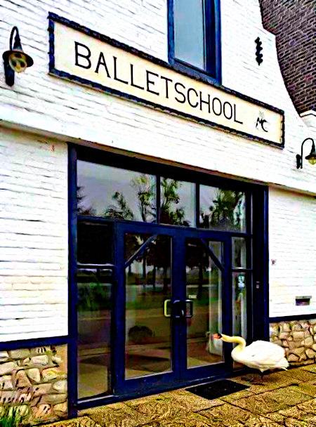 Unbeschreibliches Foto eines Schwanes, der mit seinem Schnabel gegen den geschlossenen Eingang einer Ballettschule pickt.