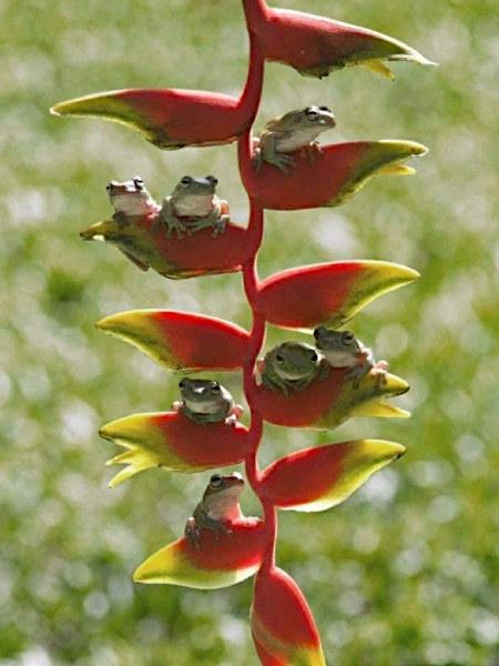 Schwierig zu beschreibendes Foto mehrerer Frösche, die auf einer Pflanze sitzen