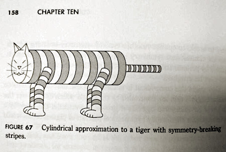 Chapter Ten -- Figure 67: Cylindrical approximation to a tiger with symmetry-breaking stripes.