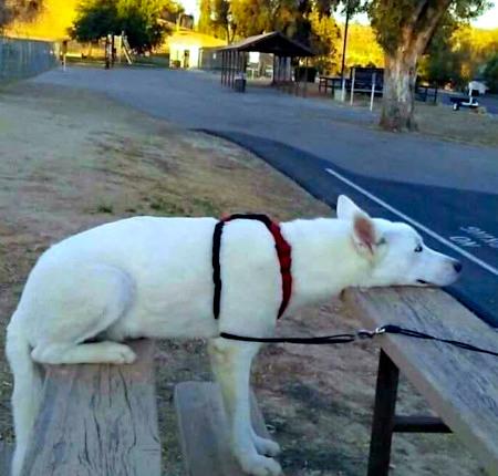 Unbeschreibliches Foto eines Hundes, der gleichzeitig sitzt, steht und liegt